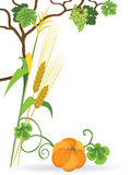 Autumn bouquet. Autumn still life of vegetables on white background Stock Images