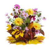 Autumn bouquet Stock Photography