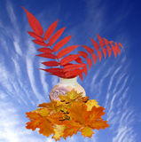 Autumn bouquet. Autumn composition from leaves against the cloudy sky Royalty Free Stock Image