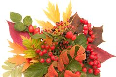 Autumn bouquet Royalty Free Stock Image
