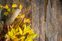 Autumn Bouquet Background Stock Images