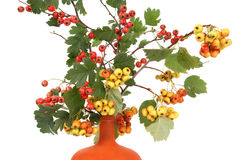 Autumn bouquet with berries of hawthorn Stock Photos