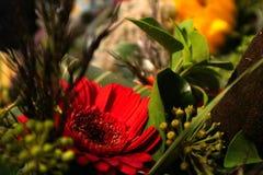 Autumn Bouquet: close up colours stock image