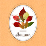 Autumn bouquet from colorful leaves. EPS,JPG. Autumn vector. Autumn bouquet from colorful leaves. Autumn card in warm colors. Autumn poster, sticker with Stock Photography