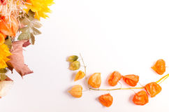Autumn bouquet. Dried flowers and cape gooseberry on white Stock Photo