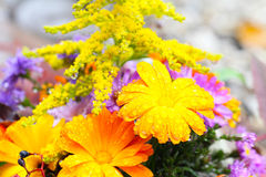 Autumn bouquet Royalty Free Stock Photo