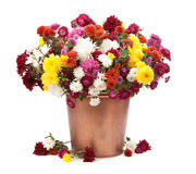 Autumn bouquet flower isolated on white background Royalty Free Stock Photography