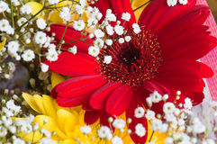 Autumn bouquet of flowers stock photos