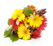 Autumn bouquet of gerbera flowers Royalty Free Stock Photography