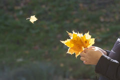 Autumn bouquet in a hand of the person Royalty Free Stock Photo