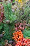 Autumn bouquet Royalty Free Stock Photo