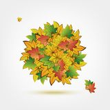 Autumn bouquet made from leaves for your design Royalty Free Stock Photos