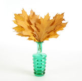Autumn bouquet of oak leaves in a vase Royalty Free Stock Photos