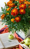 Autumn Bouquet Of Marigolds Royalty Free Stock Image