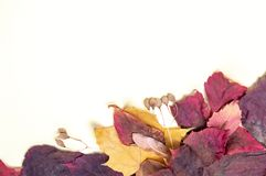 Autumn bouquet of red and yellow leaves on a white background stock photos