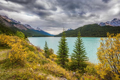 Autumn Bow Lake in Banff National Park. Canada. Azure waters of the lake surrounded by picturesque Rocky Mountains Royalty Free Stock Images