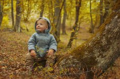 Autumn. Boy in autumn forest sitting in a tree Stock Photography