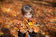 Autumn boy holding bunch of yellow leaves. Stock Photo