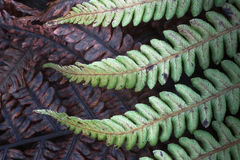 Autumn bracken Stock Image
