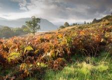 Autumn Bracken. Autumn Photo taken on Derwentwater stock image