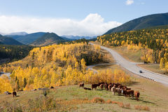 Autumn in Bragg Creek Provincial Parks Stock Photo