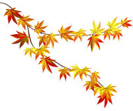Autumn branch. Autumn red and yellow gradient leaves Royalty Free Stock Photos