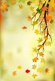 Autumn Branch Stockbilder