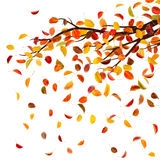 Autumn Branch Lizenzfreies Stockfoto