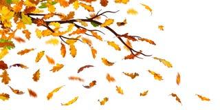 Autumn Branch Lizenzfreie Stockfotos