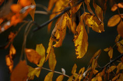 Autumn Branch Foto de Stock