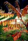 Autumn branch Stock Photos