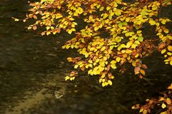 Autumn Branch Above Water Royalty Free Stock Photos