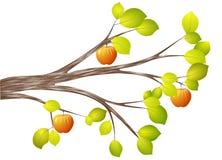 Autumn branch of apple-tree Stock Image