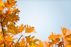 Autumn branch background Stock Photo