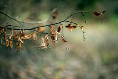 Autumn branch background texture Royalty Free Stock Photography