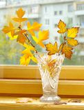 Autumn branch in bowl. Yellow autumn branch in bowl and leaf litter on window-sill Royalty Free Stock Images