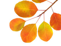 Autumn branch with colorful leaves Stock Photo