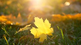 Leaves autumn grass stock footage