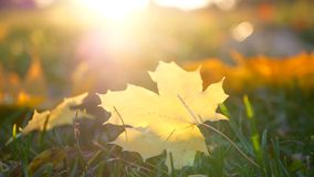 Leaves autumn grass stock video footage