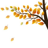 Autumn branch Royalty Free Stock Photography