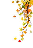 Autumn branch Royalty Free Stock Images