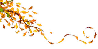 Autumn branch Stock Image