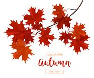 Autumn branch with red leaves. Vector image realistic vector illustration