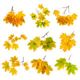 Autumn branch set isolated on white background. Stock Images