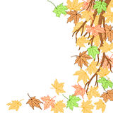 Autumn branch template Royalty Free Stock Images