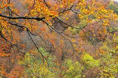 Autumn. Branch of a tree with leaves in the autumn colors Royalty Free Stock Photos