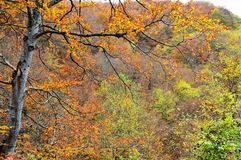 Autumn. Branch of a tree with leaves in the autumn colors Stock Photos