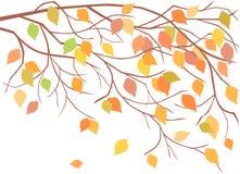 Autumn branch Stock Photo