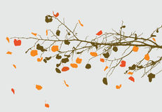Autumn branch Stock Photography