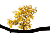 Autumn branch on a white background. (isolated Stock Photos